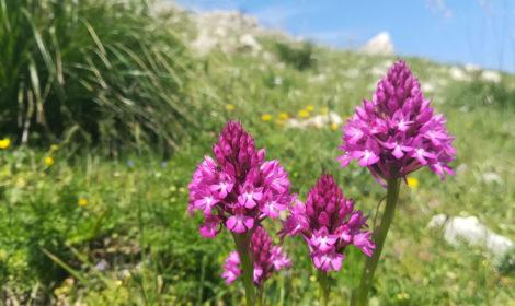 Orchidea nella Riserva dello zingaro