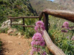 camminare nella riserva naturale zingaro