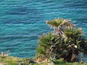 sentieri sul mare della riserva naturale zingaro
