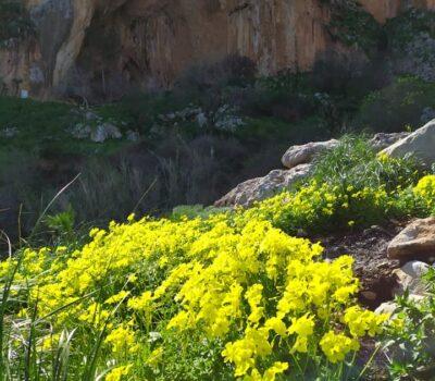 Grotta dell\\\'Uzzo Riserva dello Zingaro