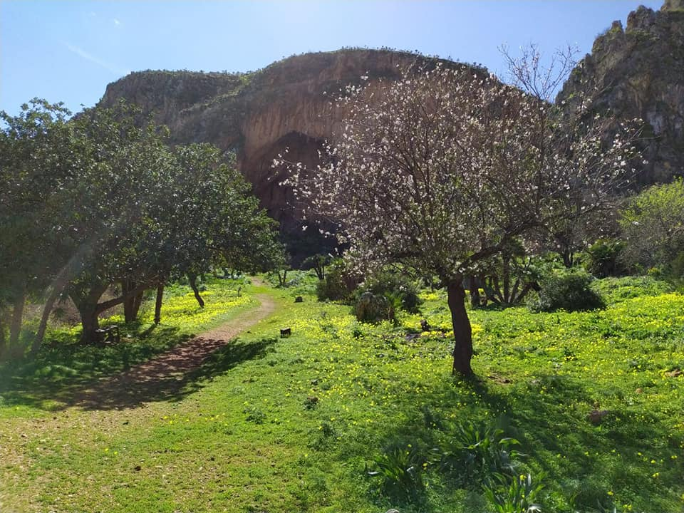 Vegetazione della Riserva dello Zingaro